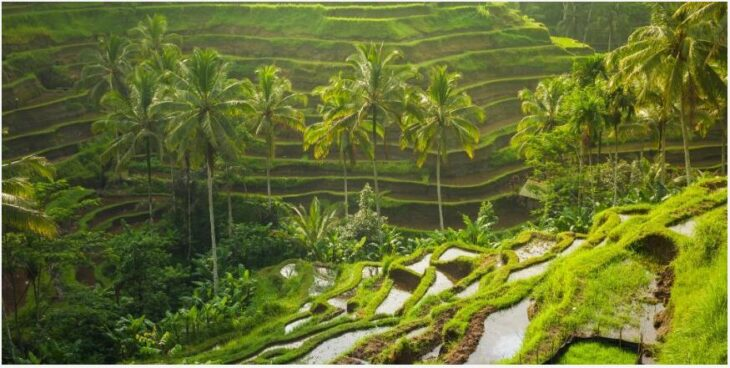Bali in March-April