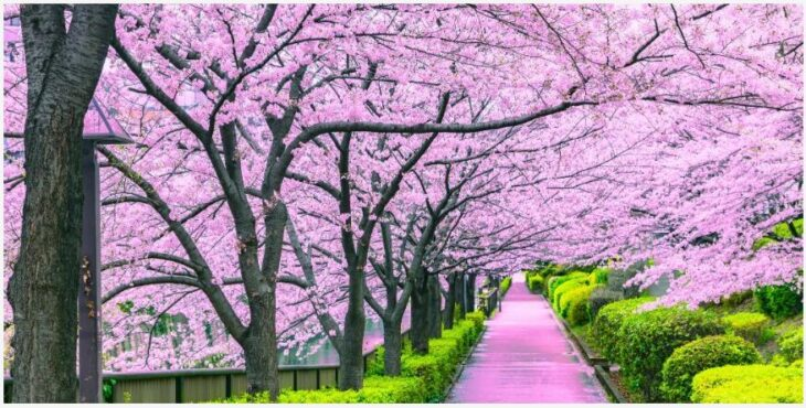 Japan in March-April