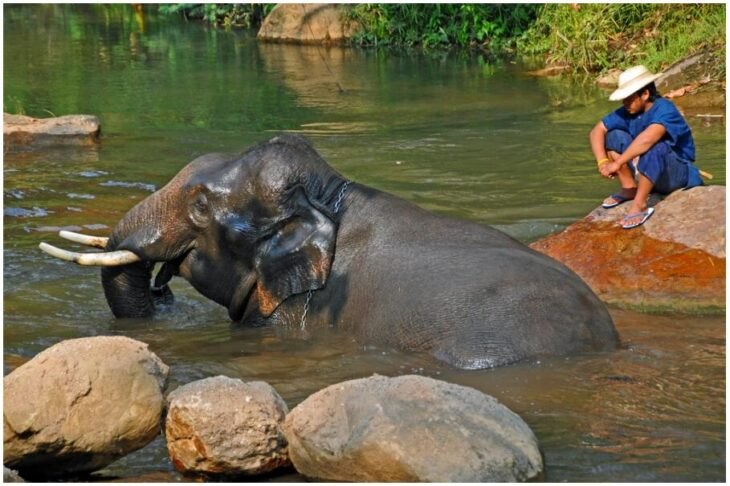 One Happy Elephant, smiling