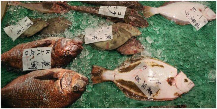 Tuna auction at Toyosu fish market